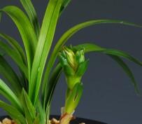 함박골 꽃 2송이