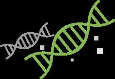 유전자 배경