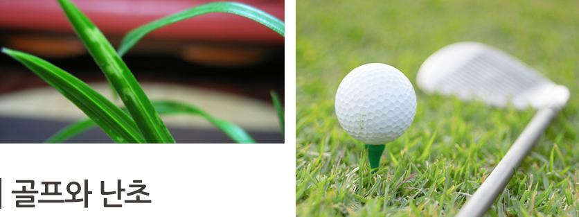 골프와 난초